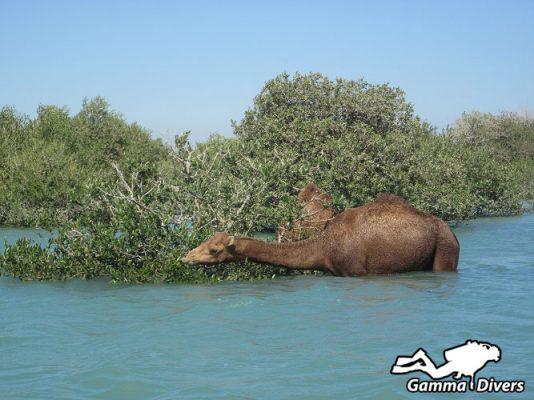 diving in Qeshm Island
