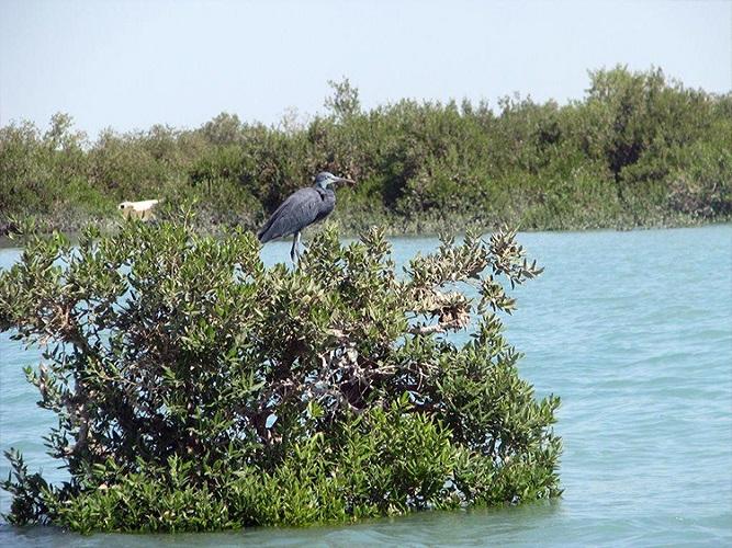 Nayband National Marine Park
